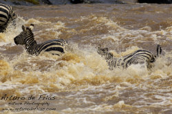 Mighty River I