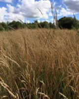 The soft rustle of late summer grasses