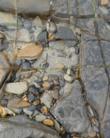 Kelp grid