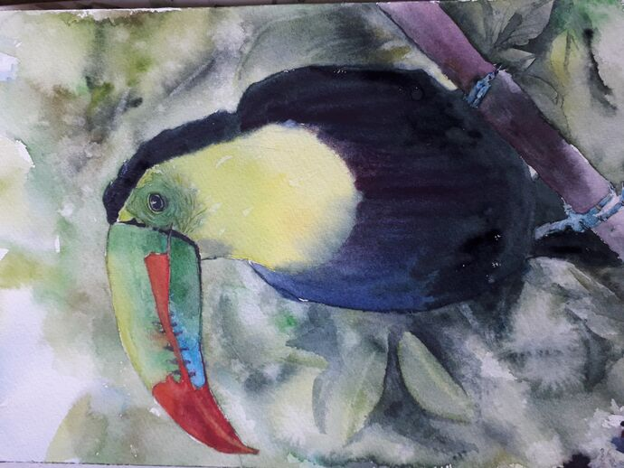 Toucan - Watercolour (I just cannot get this photo to turn right way up!)