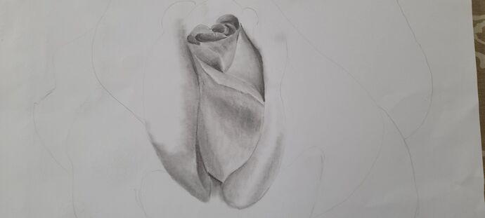 Helen's Rose