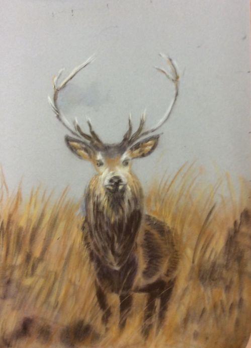 Deer deer (pastel)