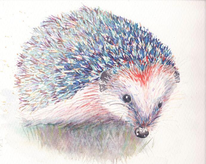 Watercolour Hedgehog, step by step