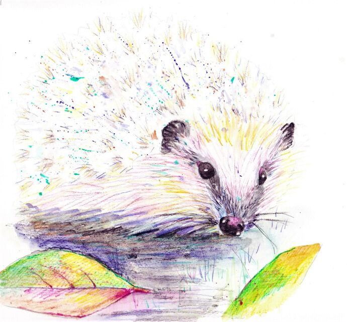 Watercolour Pencil Hedgehog - step by step