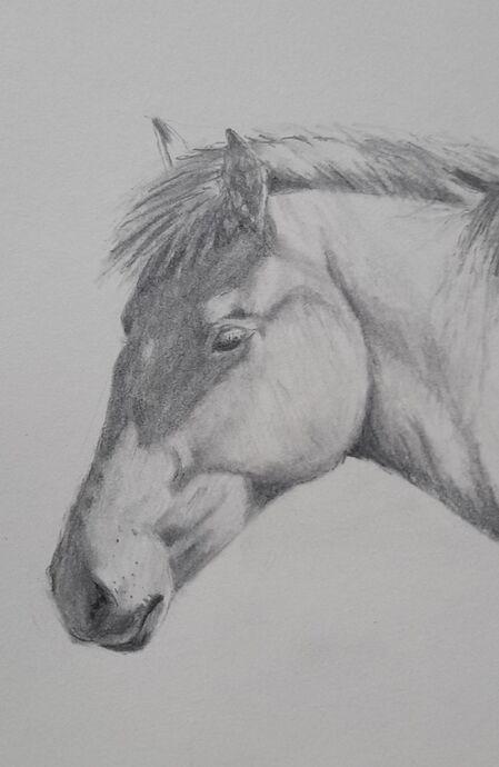 Horses Head Drawing