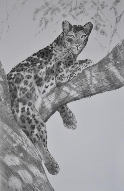 Leopard's retreat by Desi Hart