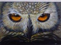 Snowy Owl by Desi Hart