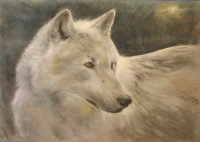 Arctic Wolf by Eric Ball