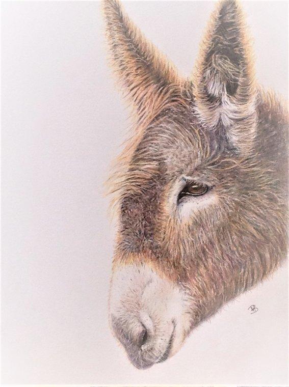 Donkey by Nina Bryant
