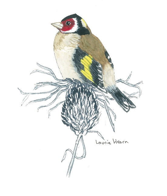 """""""Goldfinch"""" by Laurie Hearn"""