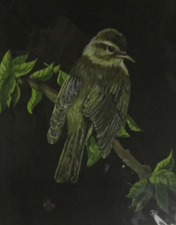Willow Warbler by Jo Faggetter