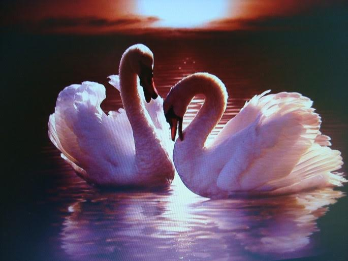 """Love eternal"" by Vic Davis"
