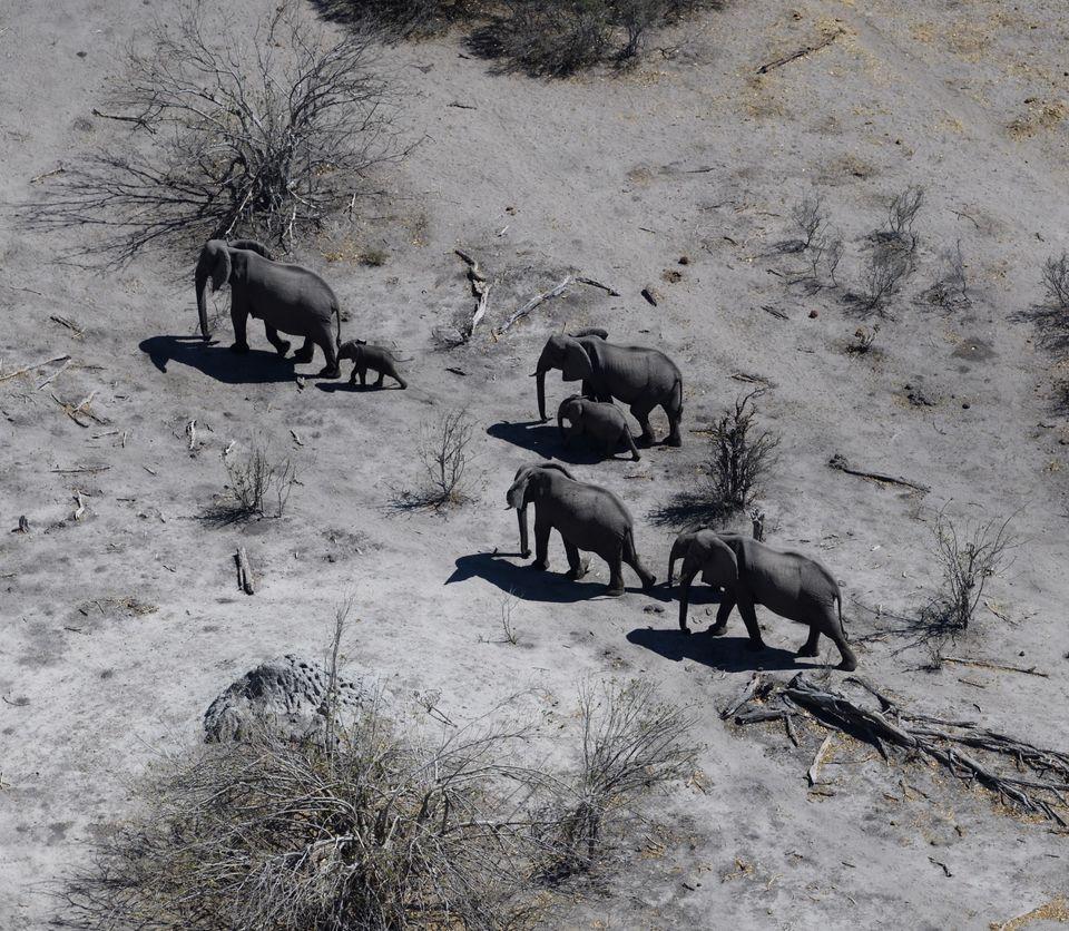 Elephants(from Helicopter),Linyanti,Botswana
