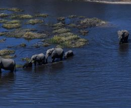 Elephants(from Helicopter),Linyanti,Botswana