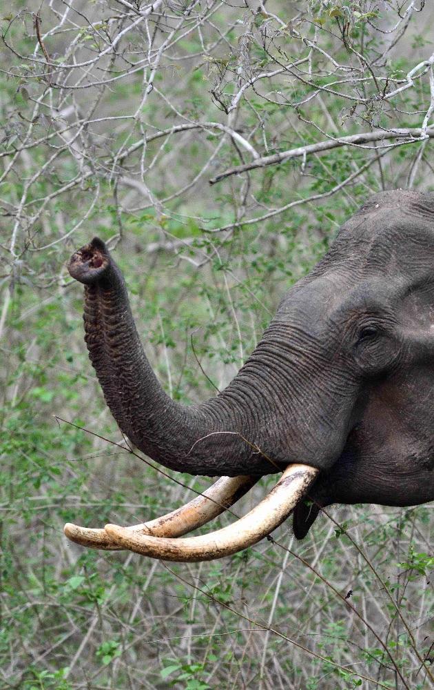 Elephant,Nagarhole