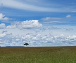Landscape,Masai Mara