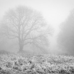 Foggy Forest Tree