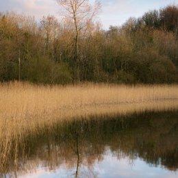 Lake Tree Reflection