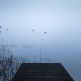Zen Fog Lake