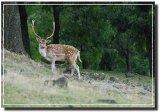 Nature at it's best / le meillure de nature sauvage