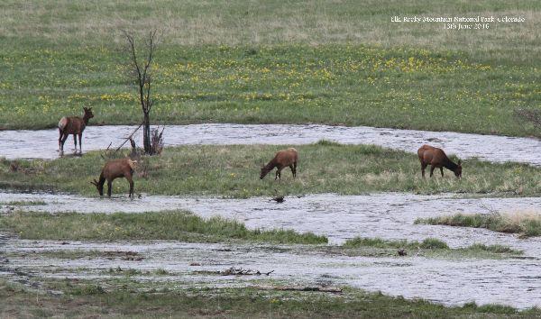 012. Elk
