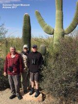 026) Saguaro Cactus ~ Sonoran Desert Museum
