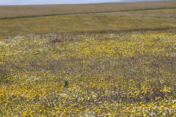 Plains North of Trujillo