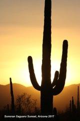 032) Saguaro Sonoran Sunset