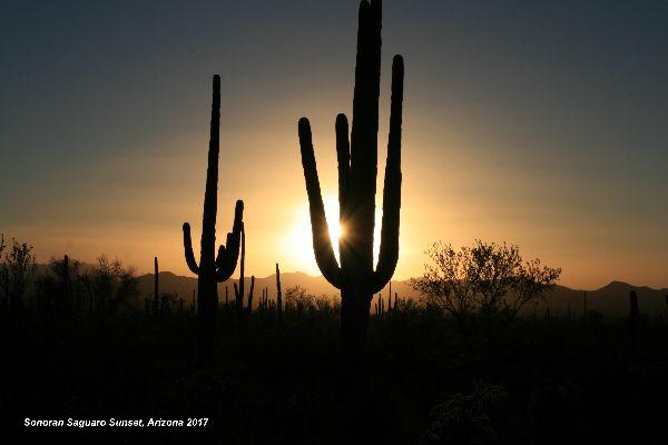 041) Saguaro National Park