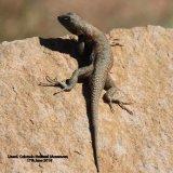 070. Lizard
