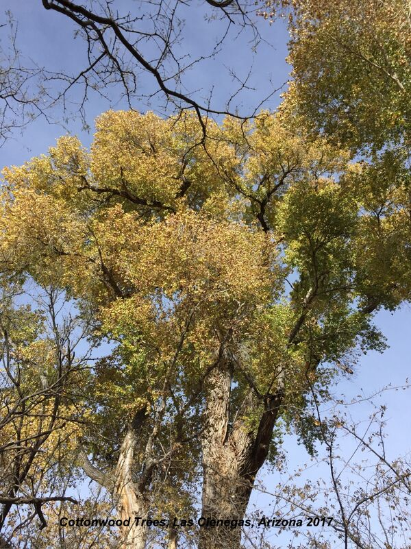Las Cienegas, Cottonwoods, Arizona