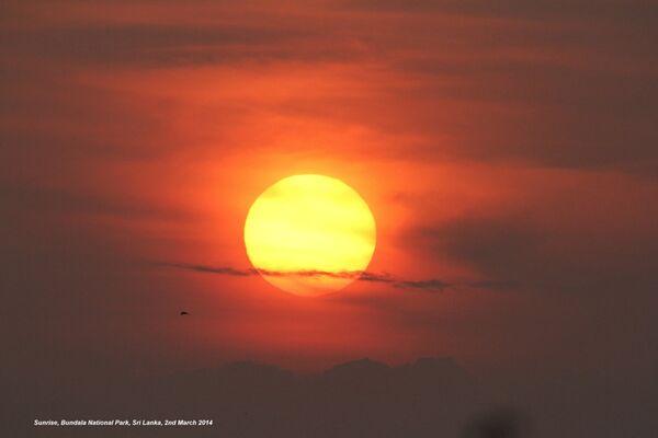 Bundala Sunrise