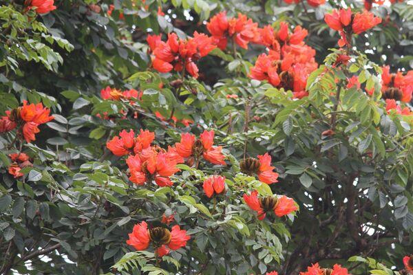 Sri Lanka Flora & Fauna