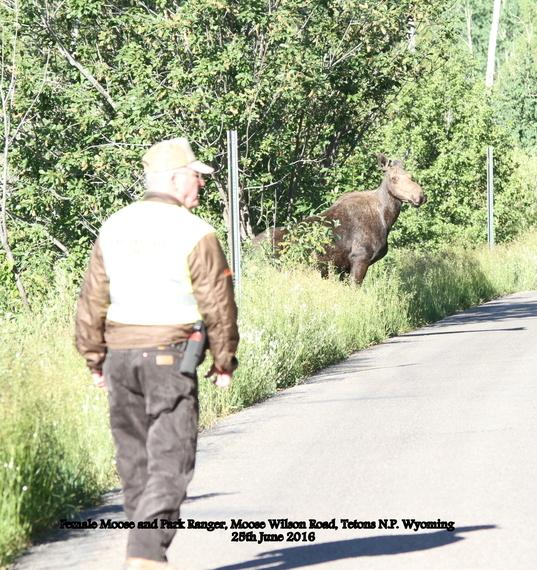 149. Moose