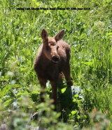 165. Moose