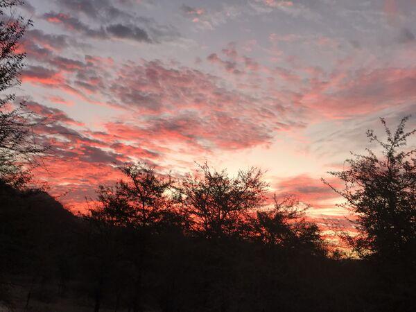 Early Morning Ranthambhore