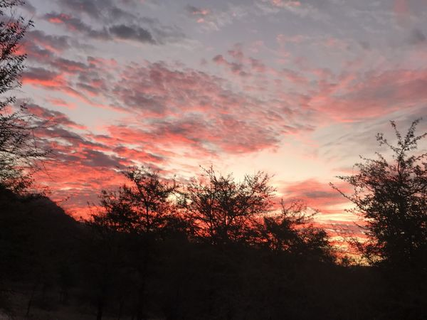 193. Early Morning Ranthambhore