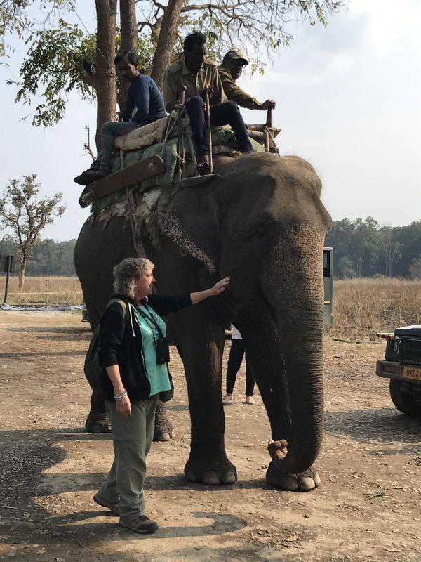 357. Elephant