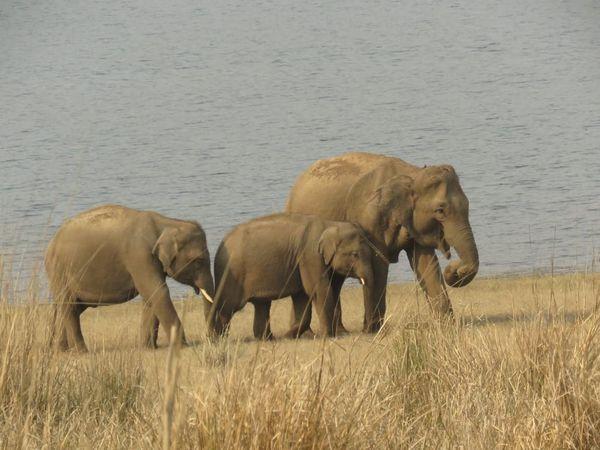 361. Elephants