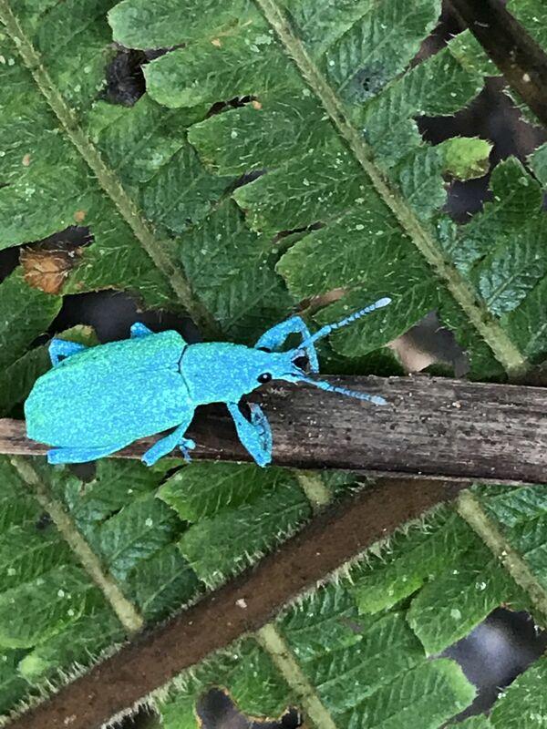 Bugs & Beetles
