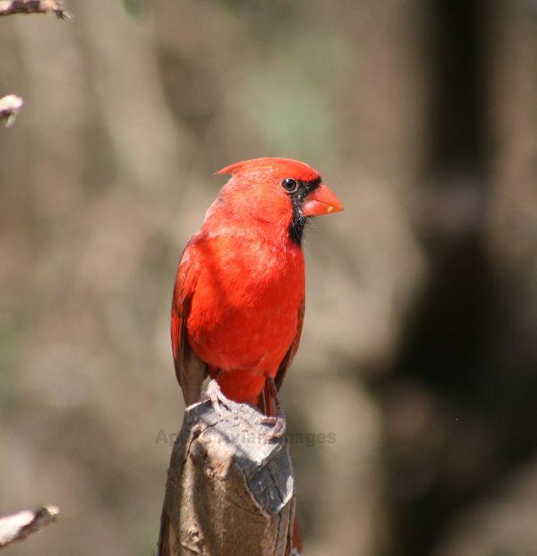 Cardinal - needs no comment !!!
