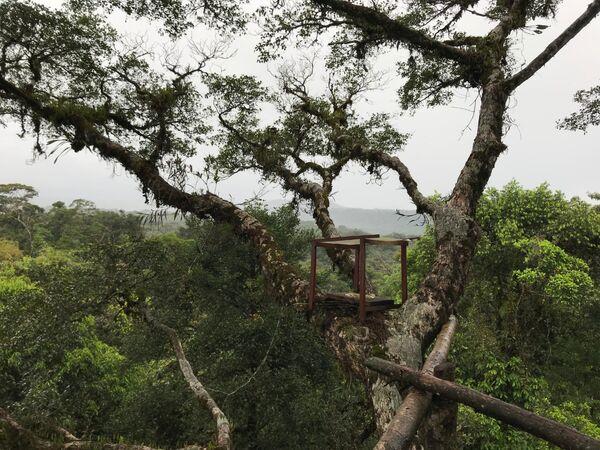 Canopy Hide, Isla la Escondida