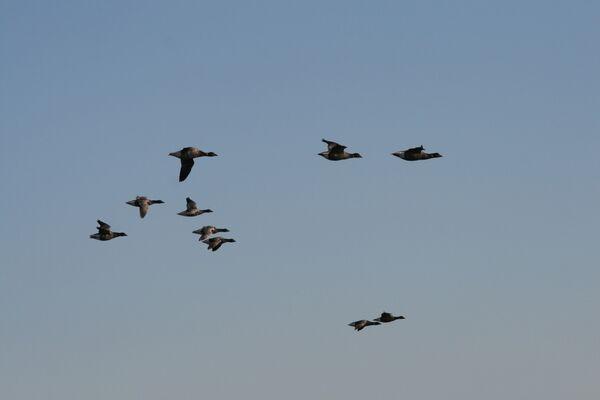November ~ Brent Geese, Norfolk