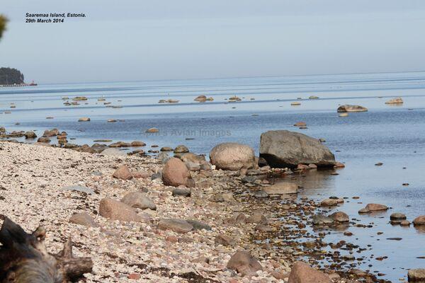 Saaremaa Island