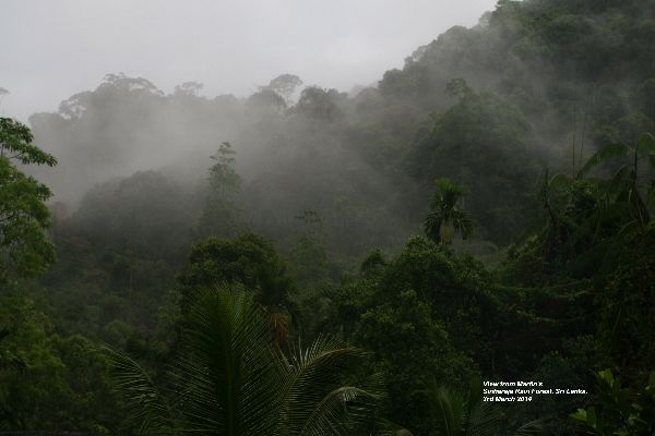 This was the view of the Sinharaja Rain Forest from Martin's Lodge, this sight greeted us every morning for breakfast and every evening for dinner.