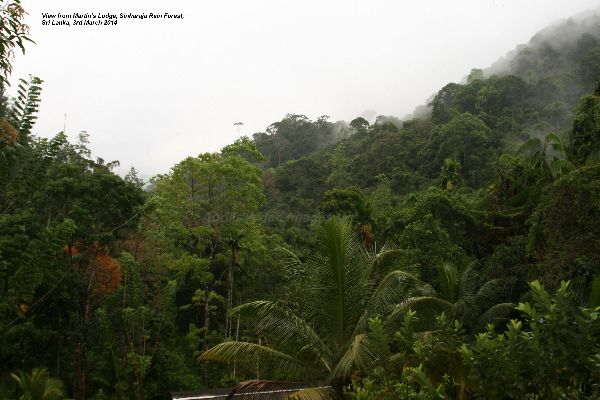 Same view without the mist ! Birds continuously flying over and the sound of Monkeys calling to one another.