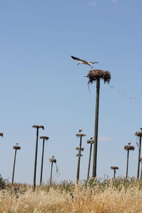 White Stork City