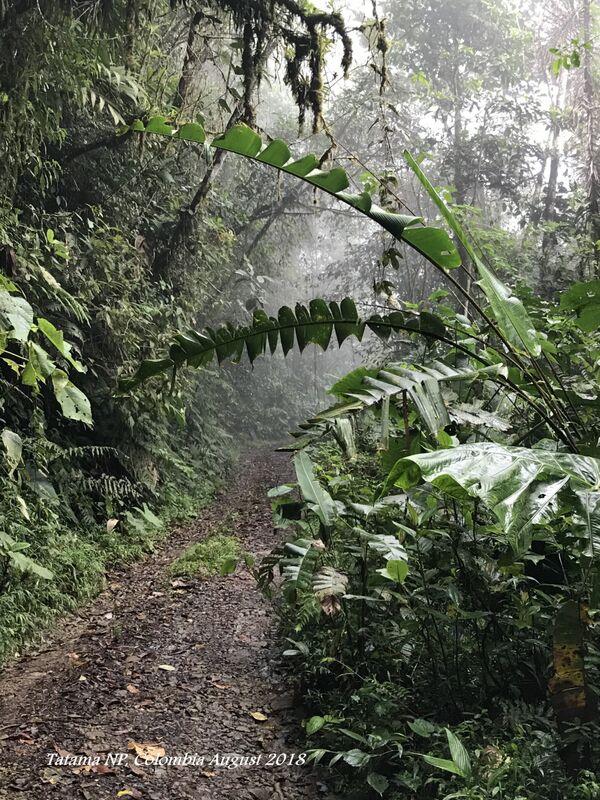 Tatama National Park