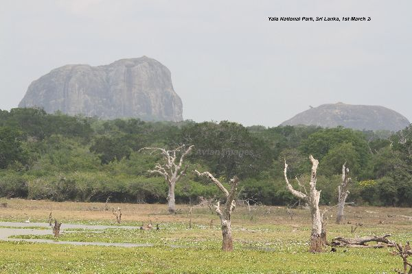 Yala National Park.  We loved Yala, not only was it a fantastic place, it held a huge diversity of birds and mammals, it was great being driven around and shown all that Yala had to offer.
