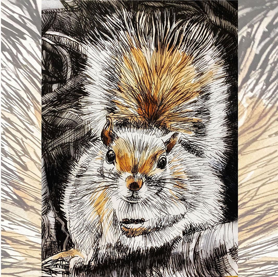 squirrel harvesting
